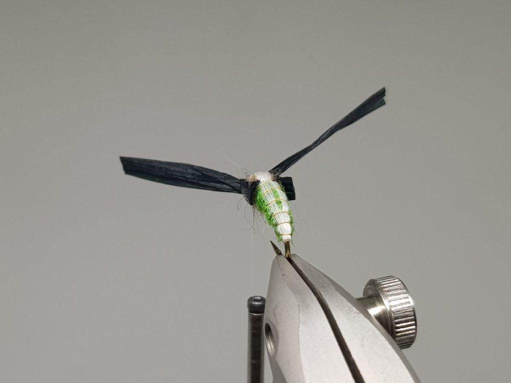 Rhyacophila pupa