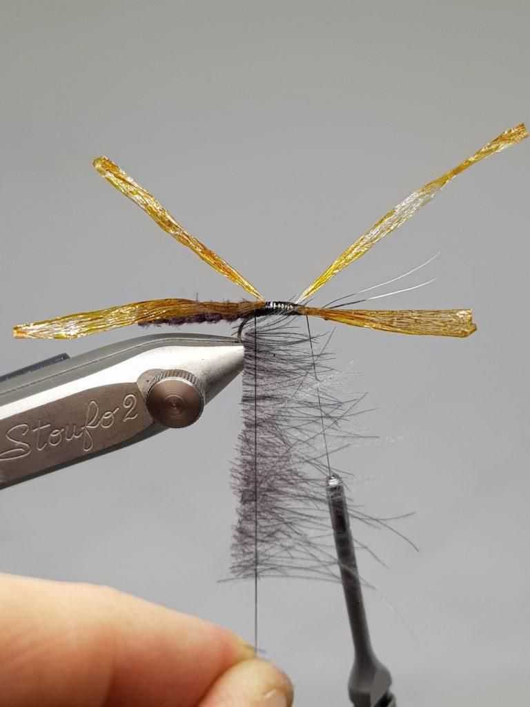 Fluttering Stonefly