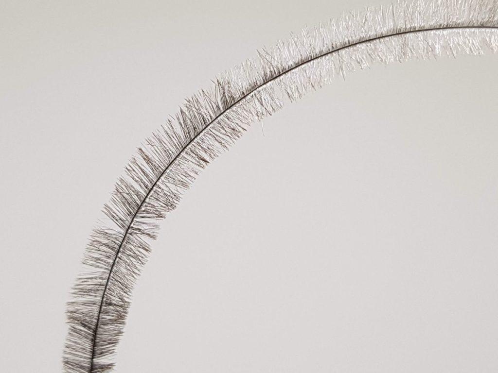 Pióra strusia